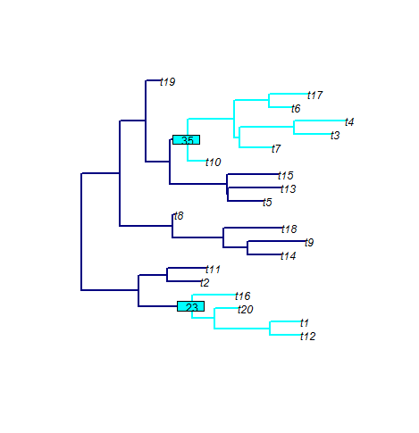 phyloTop_example